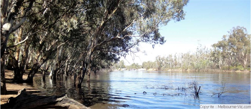 Murray River at high water